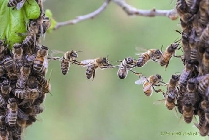 Die Wirkung des Honigs auf Körper - Seele - Geist: Bienenakrobatik
